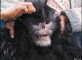 real mythical creatures found alive. Exellent Creatures A Dead Snubnosed Monkey Is Held Up By Myanmar Villagers In Early 2010  Prior To Its Being Harvested For Food With Real Mythical Creatures Found Alive