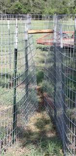 boarbuster com catch all hogs trap falls and encloses hogs by corral traps are a popular and effective method of controlling feral hogs they are capable