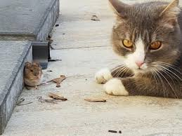 Tom & Jerry in real life: aww