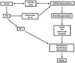 ecm motor wiring diagram panoramabypatysesma com ecm motor wiring diagram throughout x13 to psc blower conversion also like
