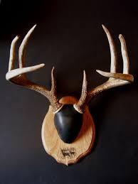 antler mount kit laser engraved deer