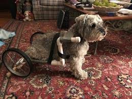 how to make a diy dog wheelchair 5