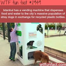 Fun Facts About Vending Machines Beauteous Istanbul's Awesome Vending Machines For Dogs WTF Fun Facts This Is