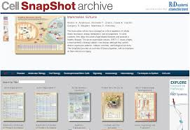 Online Snapshot Snapshots Cell Press For Advertisers