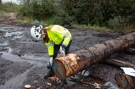 log measurements getting the most out of wood raw material with new x ray log
