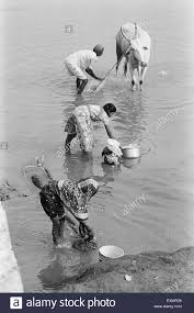 black man washing clothes. Simple Black Women Washing Clothes And Man Giving Bath To His Cattle In River  Munagoli  Village Bijapur District Karnataka India Throughout Black Man Washing Clothes E