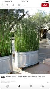 27 Patio Hacks: Clever Ways to Update Your Outdoor Space : Lemongrass  repels mosquitos