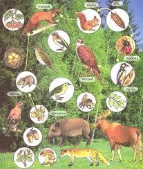 Обитатели экосистемы леса Связи и пищевые цепи Биология  Обитатели экосистемы леса Связи и пищевые цепи
