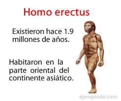 Características Del Homo Erectus
