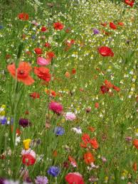 Jacquie Gordon Garden Design Gallery Wf40 Wildflower Meadow Interesting Wildflower Garden Design Gallery