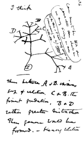 on the origin of species in mid 1837 darwin started his b notebook on transmutation of species and on page 36 wrote i think above his first evolutionary tree