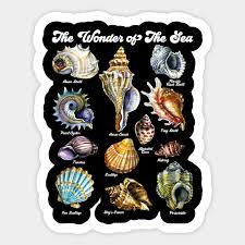 Seashell Chart Seashell Chart