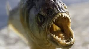 Jurassic Era Piranha Is Worlds Earliest Flesh Eating Fish