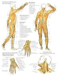 Anatomy Posters Poster Template