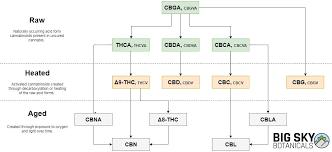Cbd Decarboxylation Chart What Is Full Spectrum Cbd Big Sky Botanicals