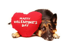Image result for Cute valentines day animals