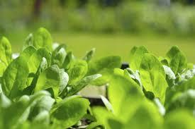 Soybean Cyst Nematode Heterodera Glycines Cleardetections