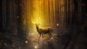 spiritual signs omens 3 ways you