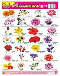 Buy Wall Charts Of Plastic Non Tear Able Of Flowers For Kids