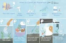 Image result for Will vinegar kill algae in fish tank?