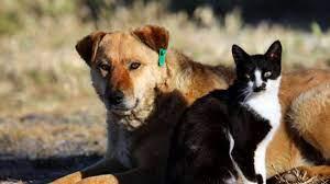 Hayvanları koruma kanunu yasalaştı - Timeturk Haber