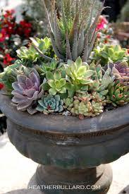 Southwestern Living - Desert Gardens -Succulents for my desert garden ~  This is magnificent!