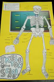 How to Make a Homemade Skeleton for a 7th Grade Project