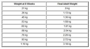 weekly weigh in charts chihuahua growth chart weight and size calculations