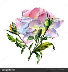 пионы тату акварель уайлдфлауэр пион цветок в акварель стиль