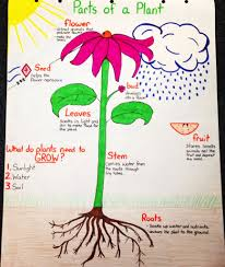 Plant Chart Parts Of A Plant Anchor Chart Parts Of A Plant Science