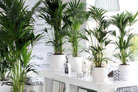 Tropical office plants Direct Sunlight Growing Tropical Indoor Plants Interior Office Plants Grow Tropical Indoor Plants The Garden Glove