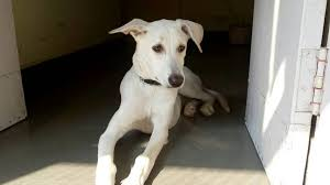 people for s jummerat bazar dog adoption centres in hyderabad justdial