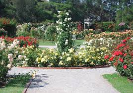 Small Picture 6 Gorgeous Rose Garden Design Ideas Sproutabl