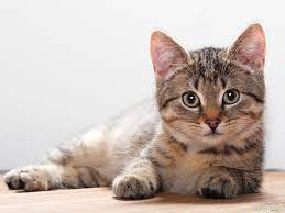 Free Cat Wallpapers and Screensavers on ...