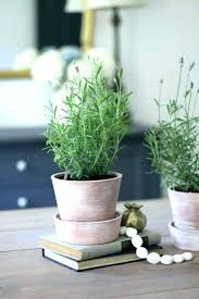 office plants no light. Plants Turning Light Green Yellow Low Office Design Classic Demo Indoor No Maintenanc