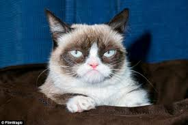 Grumpy Cat, Internet sensation wears a familiar expression at his ... via Relatably.com