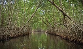 Resultado de imagen para foto manglares mexico