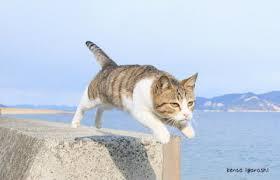 「猫の写真無料」の画像検索結果