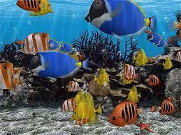 سمكة للبيع بمليون ريال الرياض! images?q=tbn:ANd9GcS1C1QToERPPNddrBPw5huu-Q0x21_GKlH4Vi1DS8LD7f1GMVkc