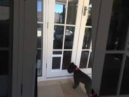 dog door in a glass door supplied and installed in sydney