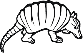 Small Picture Armadillo Coloring Pages