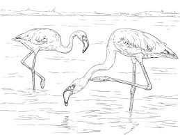 Kleine Flamingo Kleurplaat Categorieën Flamingos Gratis