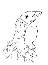 Small Picture Baby Turkey Coloring Pages Coloring Coloring Pages