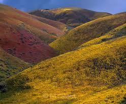 wildflowers tremblor range carrizo plain national monument san luis obispo county california