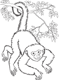 Spider Monkey Coloring Page At Getdrawingscom Free For Personal