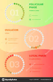 Menstrual Cycle Phases Chart Vector Infographics Chart Female Menstrual Cycle Follicular
