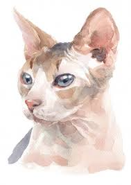 Sphynx Cat Color Chart Sphynx Cat Face Vectors Photos And Psd Files Free Download