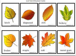 Fall Leaf Chart Leaves Archives Jdaniel4s Mom
