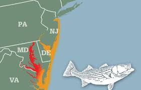 Striper Migration Map April 9 2015 Surf Fishing