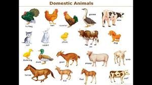 Domestic Animals Name In English With Picture And Sound